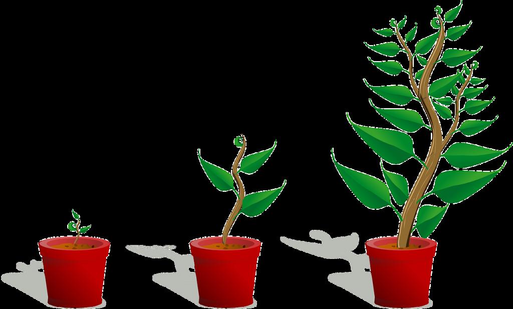 sapling, plant, growing